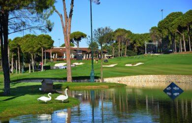 Carya golfbana